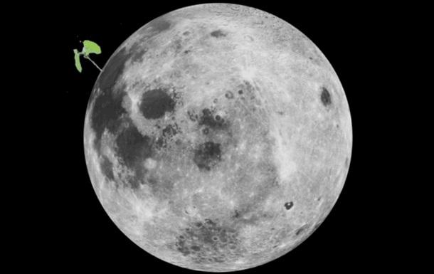 Паросток бавовни на китайському місячному ровері завмер