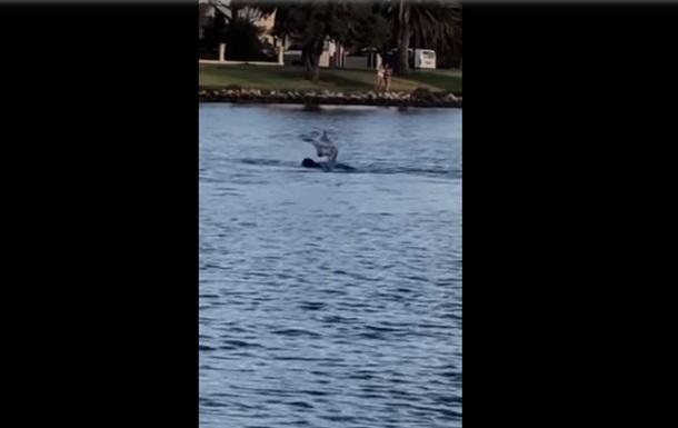 Редкую дружбу дельфина и собаки показали на видео