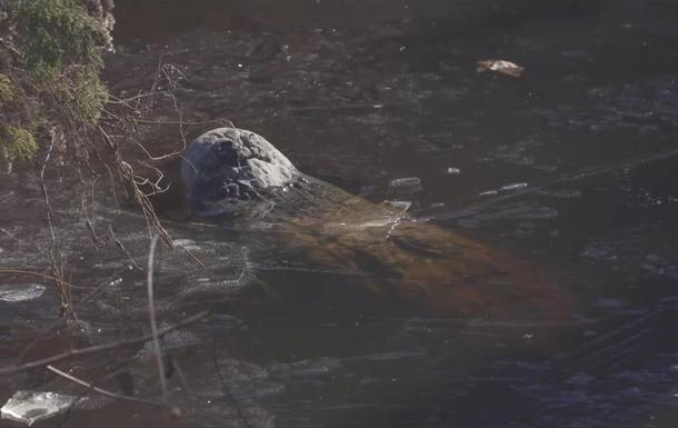 В США аллигаторы вмерзли в лед