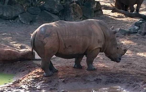 Дитина дивом вижила в клітці з носорогами