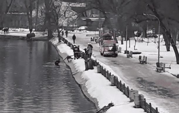 Днепрянин бросился в холодную воду, чтобы спасти пса