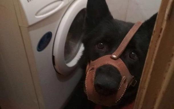 Во Львове женщина натравила собаку на полицейских