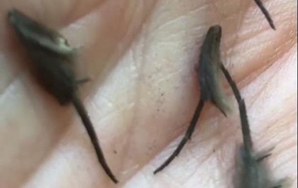 Житель Новой Зеландии нашел неизвестных существ