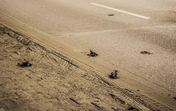 В Днепре дорогу усыпало мертвыми птицами