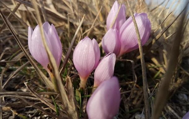 В Херсонской области цветут подснежники и крокусы