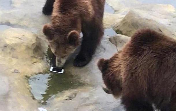 Турист перепутал телефон с яблоком и бросил его медведям