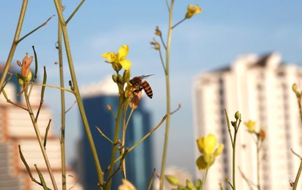 Вымирание насекомых приведет к экологической катастрофе