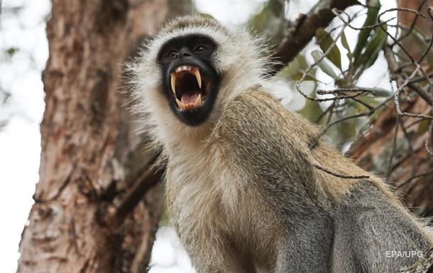 Примат похитил ребенка и не хотел его отдавать