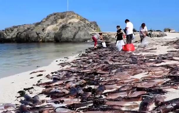 Пляж Чили наводнили тысячи мертвых каракатиц