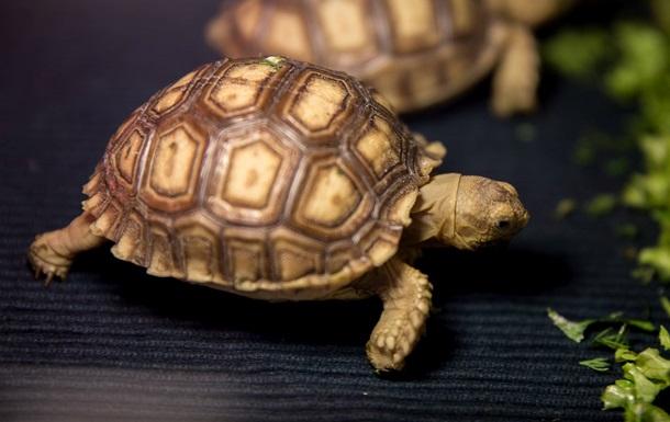 Екопарк під Харковом дав життя рідкісним черепахам