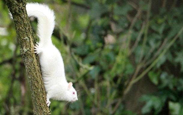 Белка-альбинос: фото