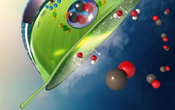 Созданы  искусственные листья , поглощающие углекислый газ