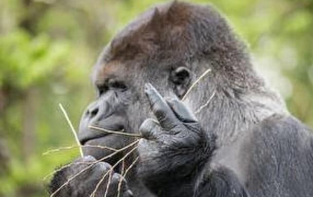 Недiльна проповiдь про еволюцiю