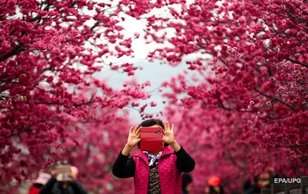 В китайском Гуанчжоу зацвел парк сакуры