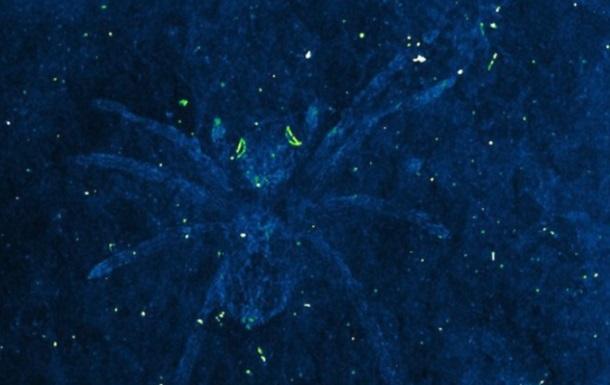 Ученые откопали древних пауков со светящимися глазами