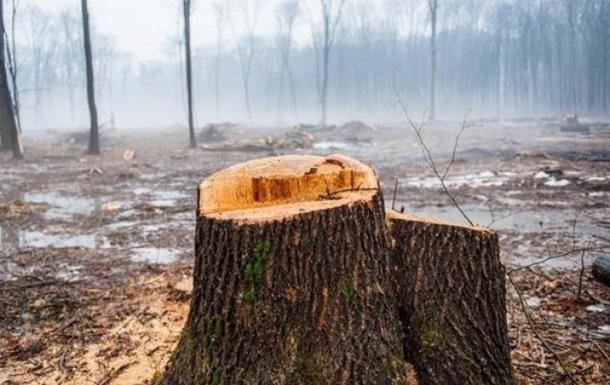 На Закарпатье 17-летнего парня убила срубленная ветка дерева