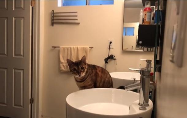 Аніматор допоміг коту співати  краще за реперів