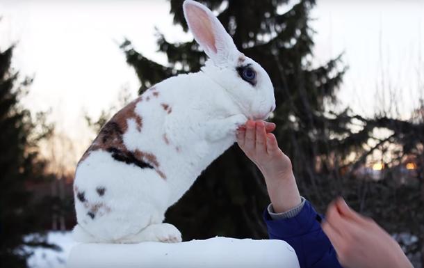 Финский кролик установил мировой рекорд