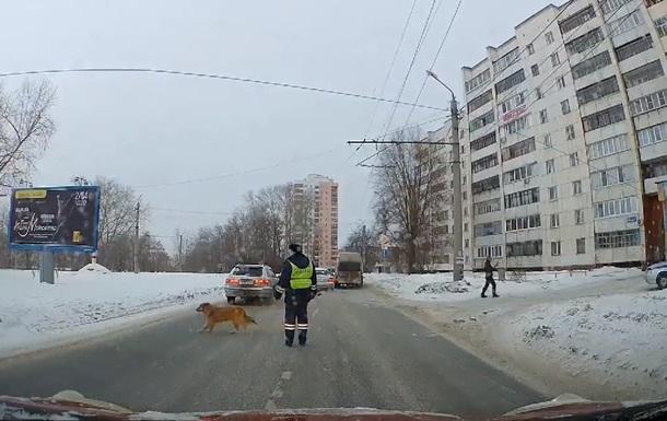 Ввічливий собака-пішохід став зіркою Інтернету