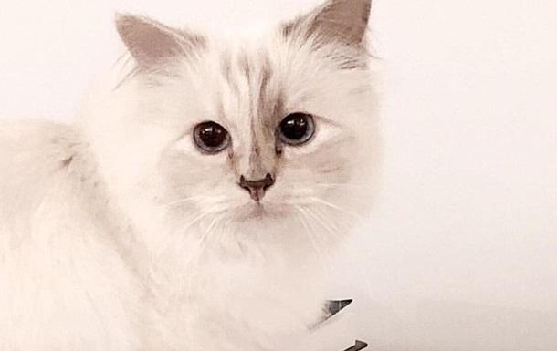 Кошка Карла Лагерфельда скорбит по хозяину