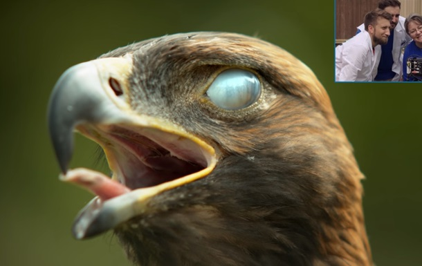 Орел: видео