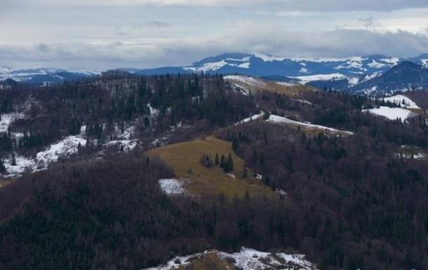 Украина занимает шестое место по запасам древесины в Европе