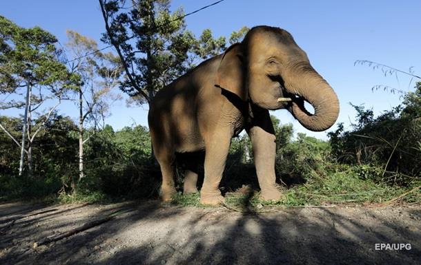 Слон потопил плот с туристами в Таиланде