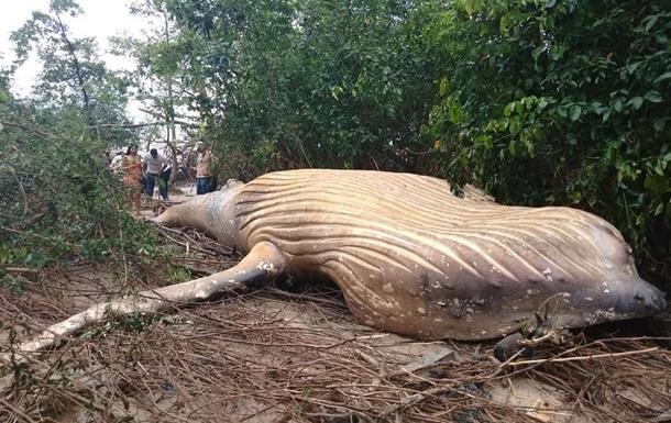 В джунглях Бразилии нашли мертвого кита