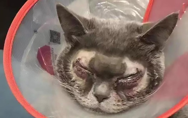 Хозяйка потратила 40 000 грн на пластическую операцию для кота