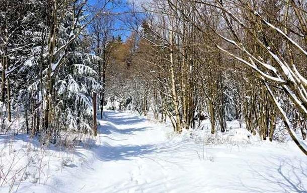 На Донбассе подорвались трое мужчин, собирая дрова в лесу