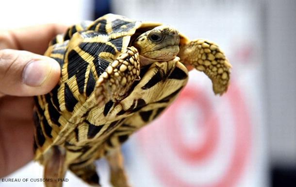 У покинутому в аеропорту багажі знайшли 1500 живих черепах