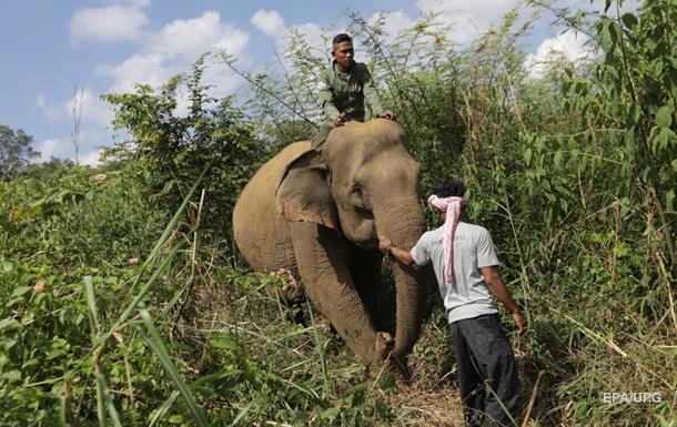 В Индии слон убил погонщика