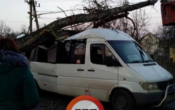 Под Киевом дерево упало на маршрутку с пассажирами