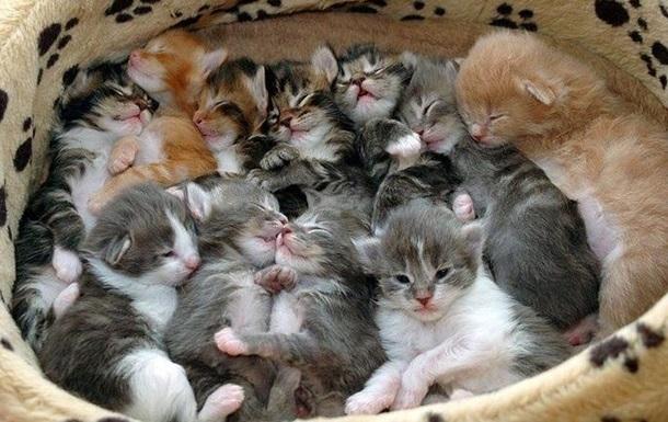 Одессит получил семь лет тюрьмы за издевательства над котятами