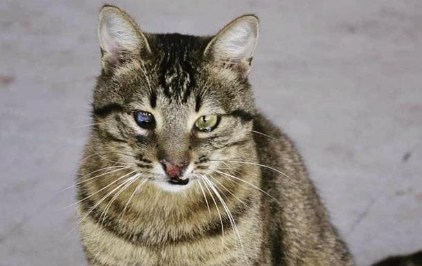 Черниговский кот по кличке Терминатор стал блогером