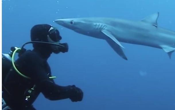 Океанолога  поцеловала  крупная голубая акула