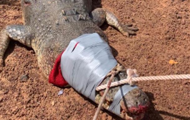 600-килограммового крокодила, поедающего собак, поймали в Австралии