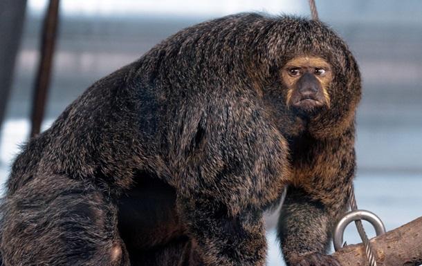 Сеть удивило фото необычайно мускулистой обезьяны