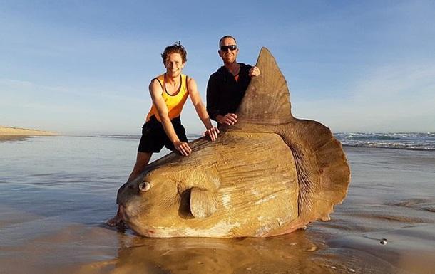 В Австралії рибалки знайшли гігантську сонячну рибу