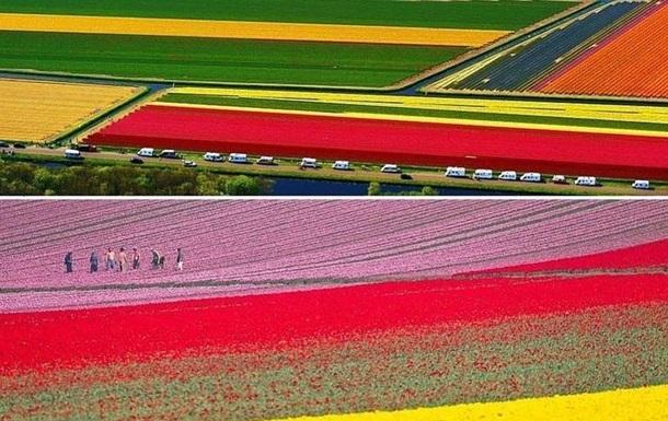 В королевском парке цветов в Нидерландах открывается новый сезон