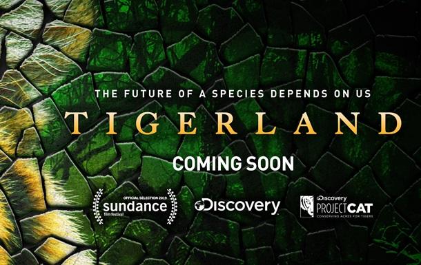 «Спасти тигра» первым можно в Unit.City