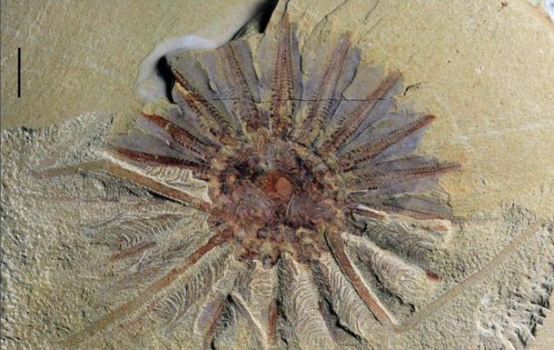 В Китае нашли останки древнего существа