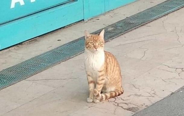 У Стамбулі кішка захищає двері в магазин, нападаючи на перехожих і собак
