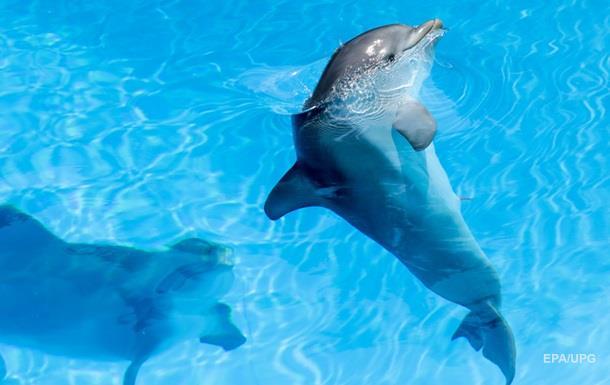 У Франції зафіксували рекордну масову загибель дельфінів