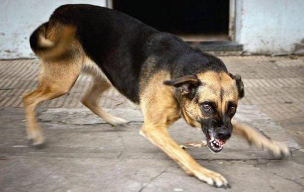 В Николаеве бешеная собака покусала восемь человек