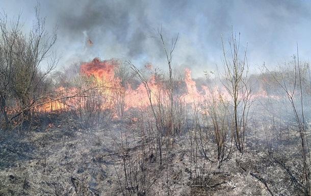 Під Ужгородом горіло 35 гектарів лісу