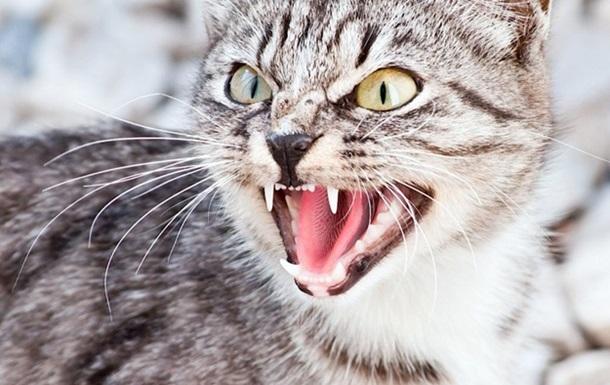 В Львовской области бешеный кот покусал людей