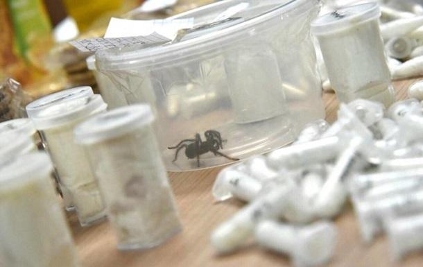 Филиппинские таможенники изъяли посылку с 757 живыми тарантулами