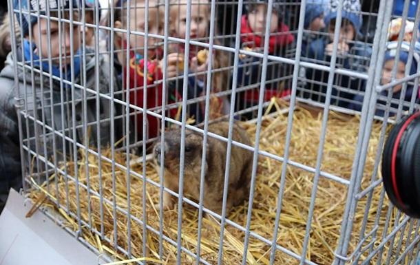 У Львові викрали тварин з контактного зоопарку