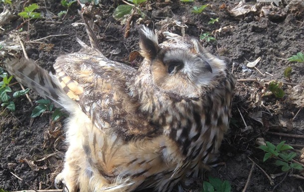 Массовую гибель птиц и животных выявили в Тернопольской области. 18+